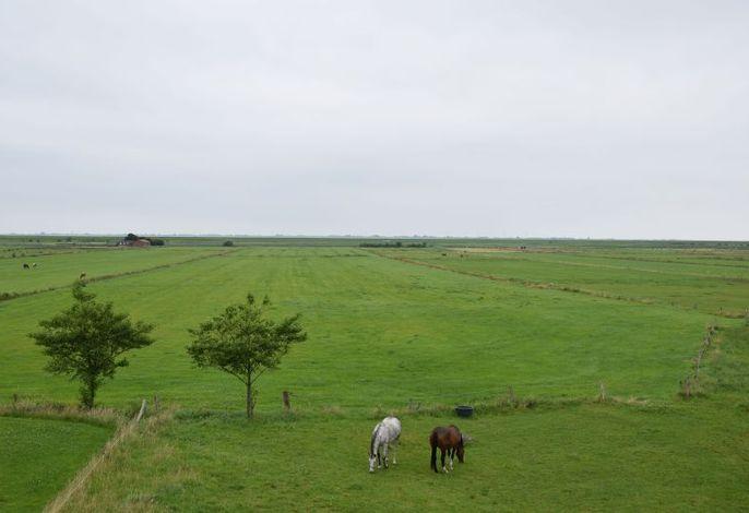 Bauernhof Maashof (Husum) - 40085 - Rathmann