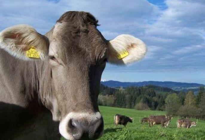 Kühe dürfen bei uns selbstverständlich raus aus dem Stall