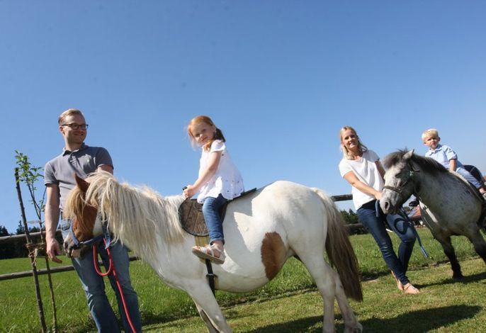 tägliches Ponyreiten