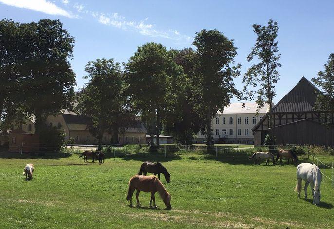 Unsere Ponys/Pferde vor dem Hof