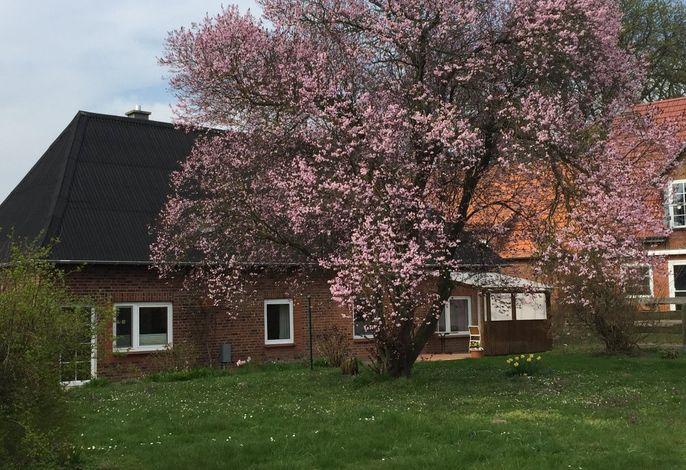 Unser Haus im Frühling