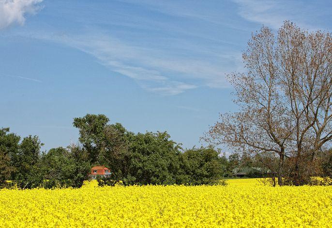 Haus am Feld