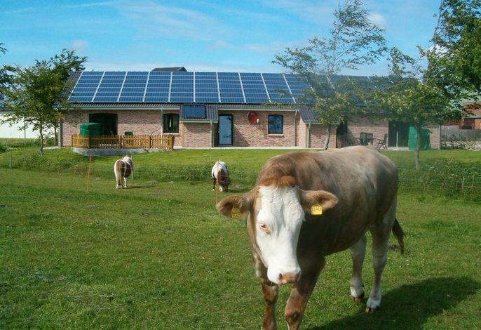 Ferienhaus mit Kuh