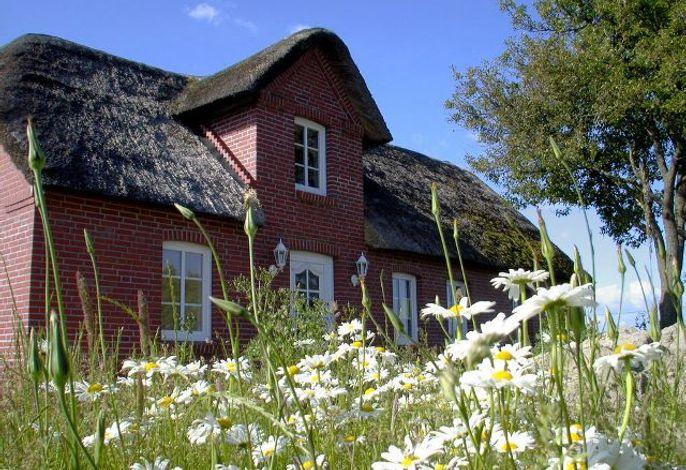 Ferienhaus Blick ins Tüterland