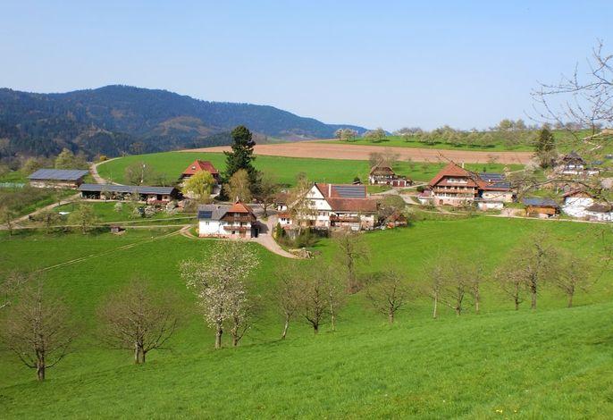 Der Billersberg