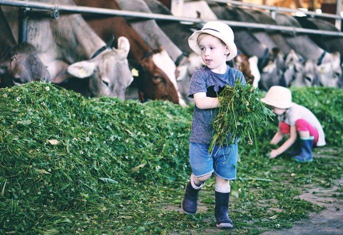 Gras füttern