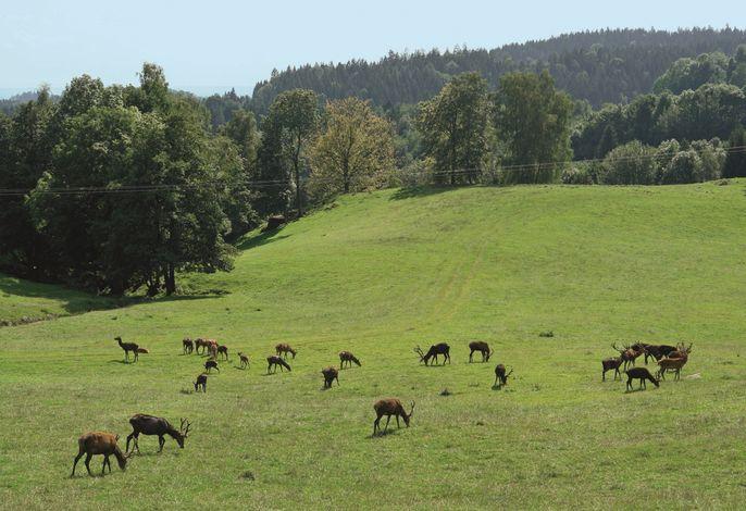 Blick vom Wild-Berghof Buchet
