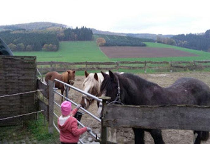 Pferde Ferienhof Rüßmannn