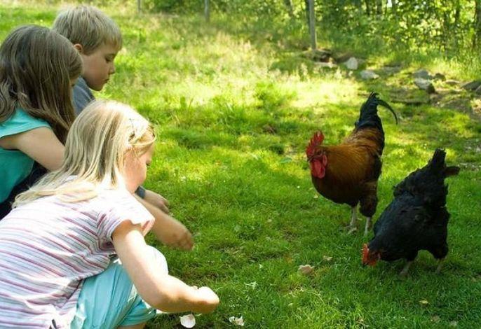 Kinderparadies + Bio-Bauernhof