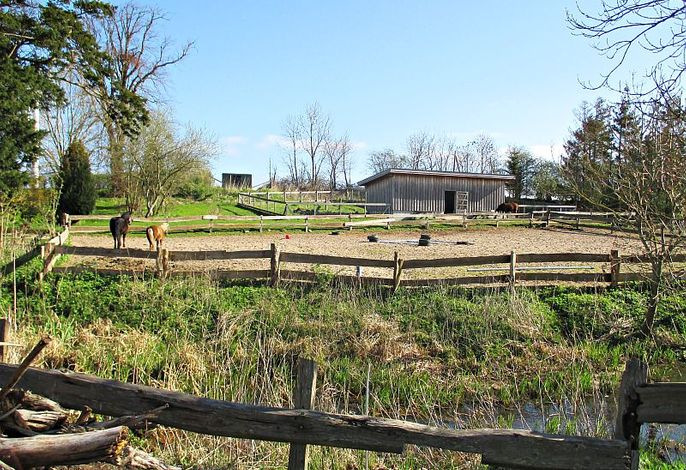 Reitplatz und Pferde