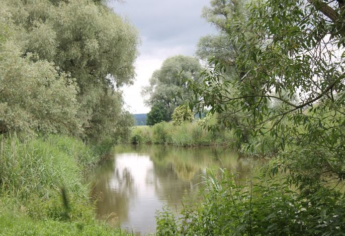 Natur um die Wörnitz