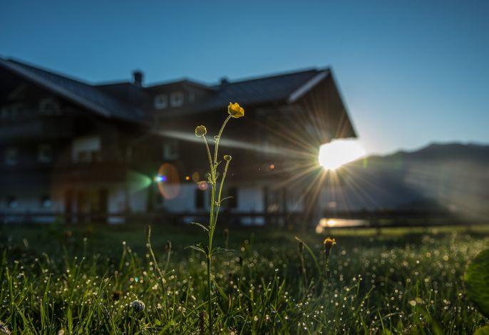 Sonnenaufgang am Alpenhaus Steiner