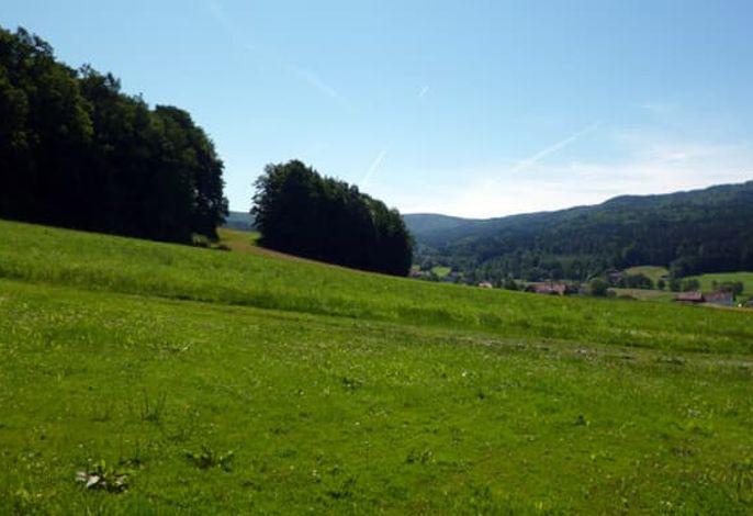 Grüne Wiesen rund um's Feriendorf