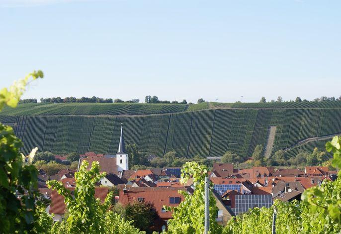 Blick auf Nordheim und die Weinberge