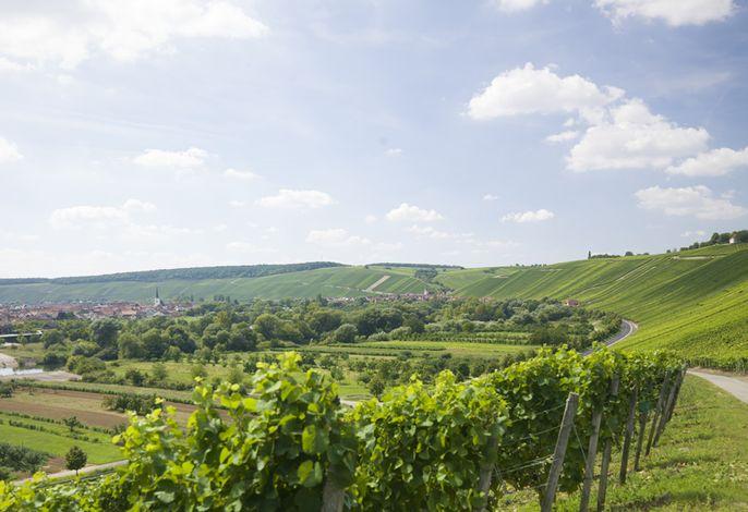 Blick von Volkach nach Escherndorf
