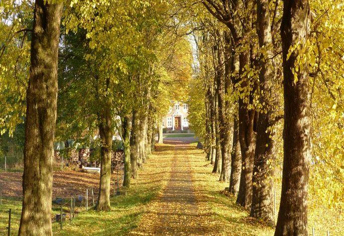 Idyllische Einfahrt zu dem familienfreundlichen Hof Fraulund