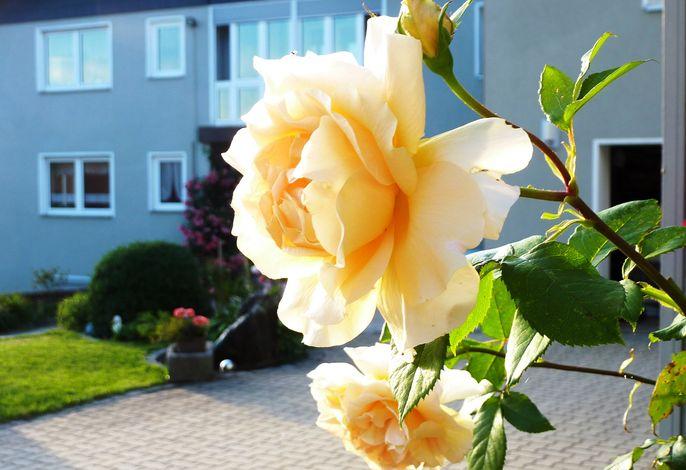 herrliche Rosenpracht