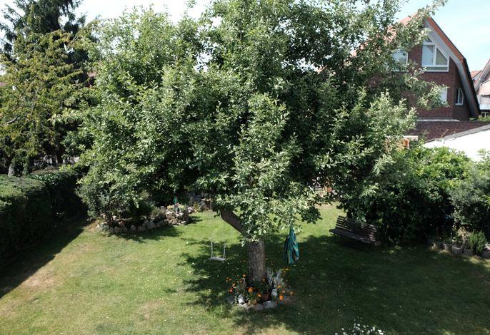 Garten - nur Ansicht