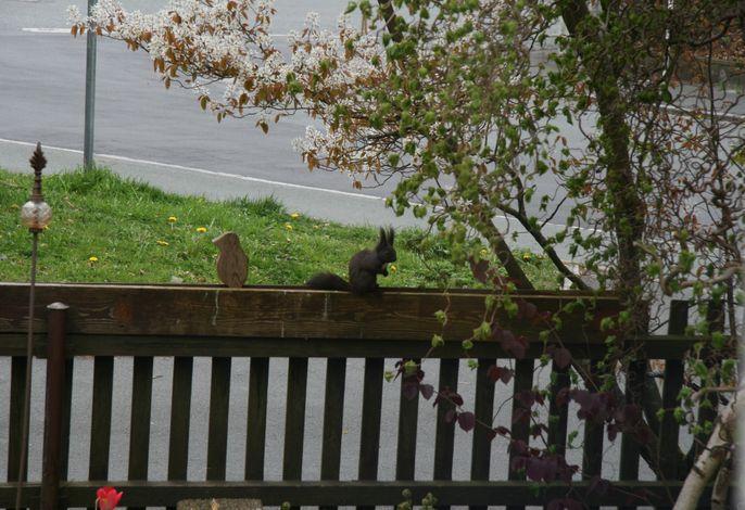 kleiner Besucher