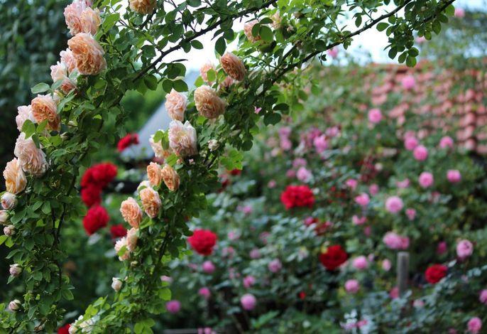 Meise Blumen