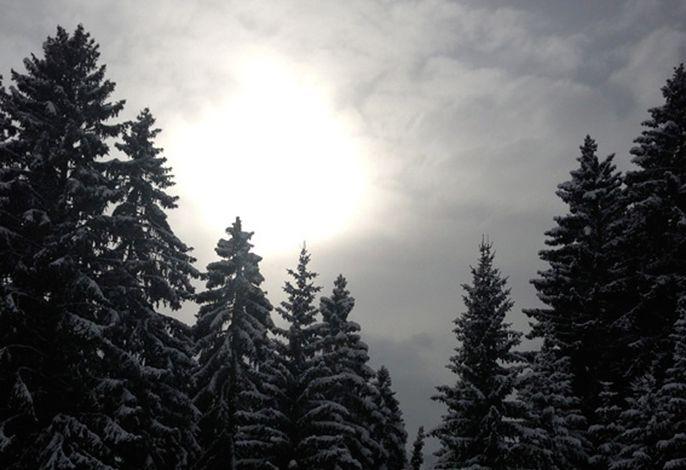 Winterwald Impression