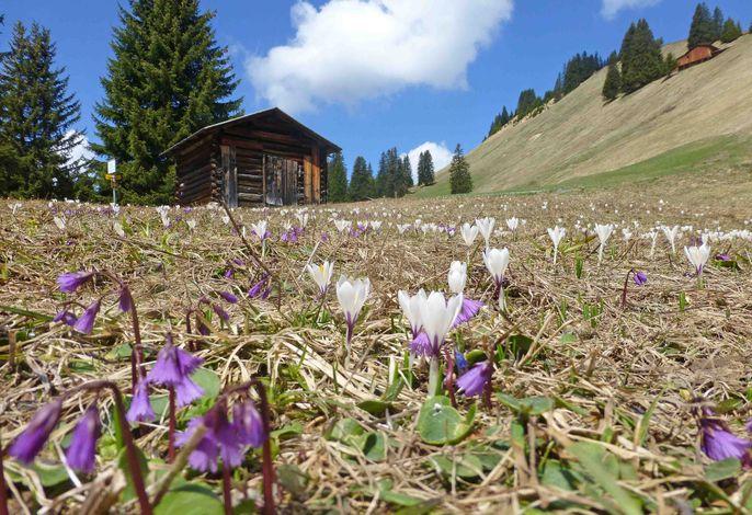 Tratza Hochmoor im Frühling