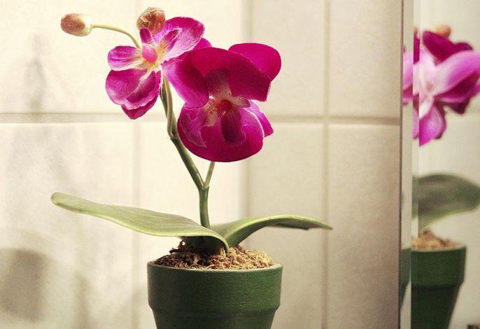 Haus Sonnenruh - Orchidee Bad