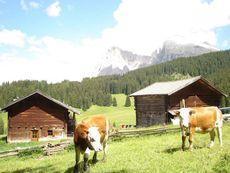 Maliderschwaige Seiser Alm/Alpe di Siusi