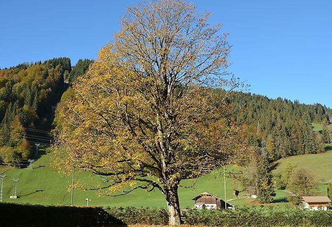 Oberland Nr. 19