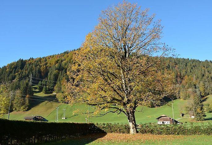 Oberland Nr. 3