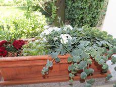 Blumen auf Veranda