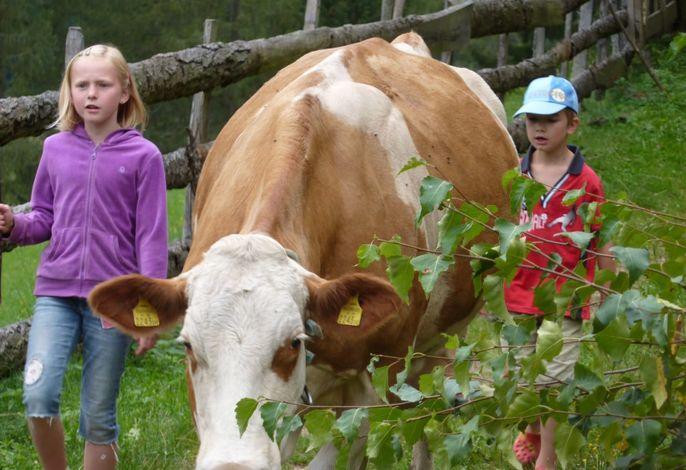 Kühe von der Weide holen