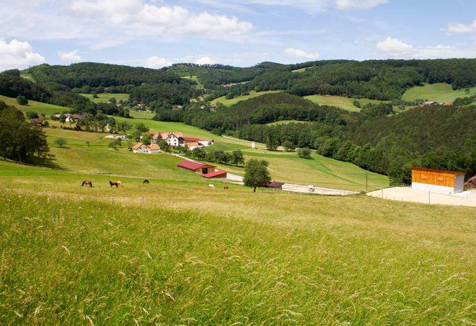 Waldhof Grasel