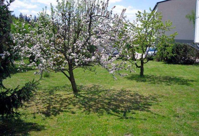 Glashof - Garten