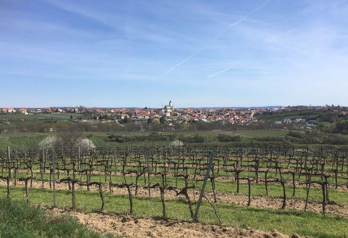 Weingarten mit Blick auf Stratzing