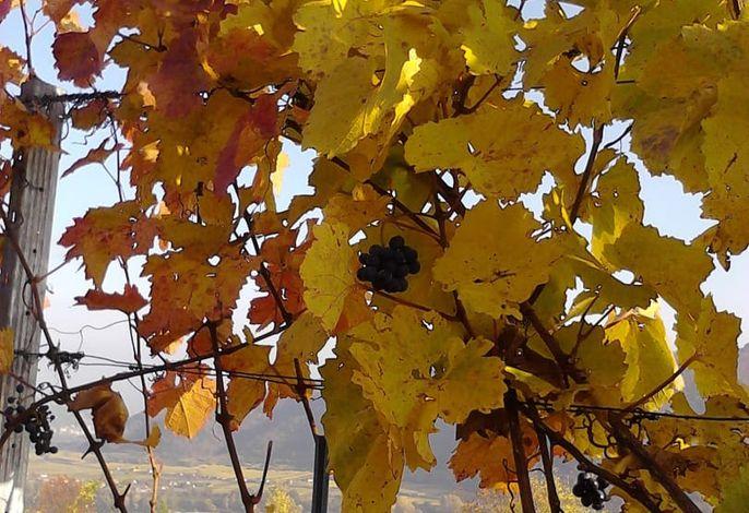 Herbstweingarten