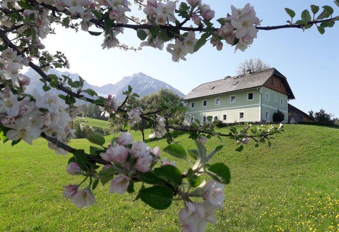 Unser Hof im Frühling