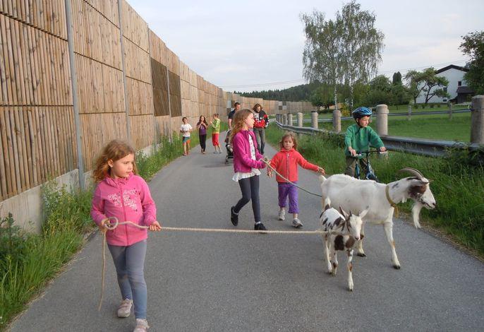 Eine Dorfrunde mit den Ziegen