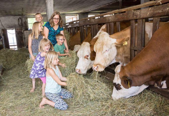 Kinder füttern Kühe Biohof Stadler