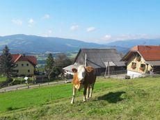 Hof mit Kuh