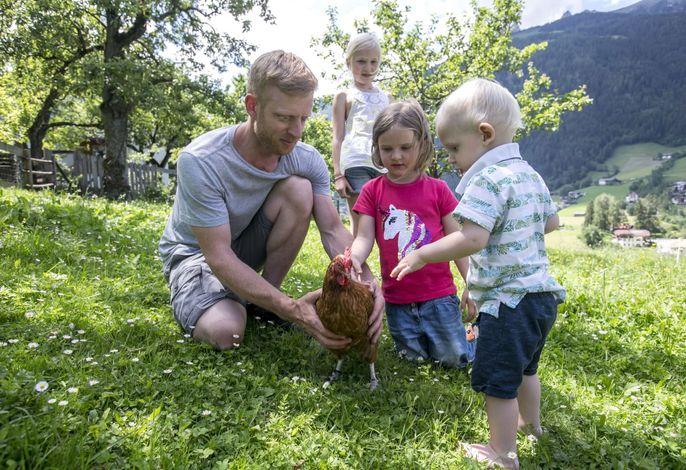 Schon mal ein Huhn gestreichelt?