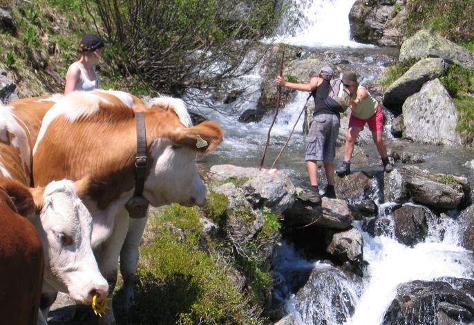 Sommer in den Kitzüheler Alpen oberhalb der Alm