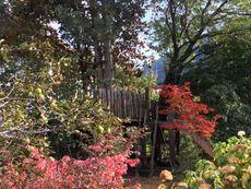 so viele Farben im Garten