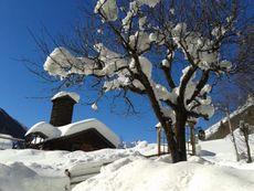 Apfelbaum Winter im Garten