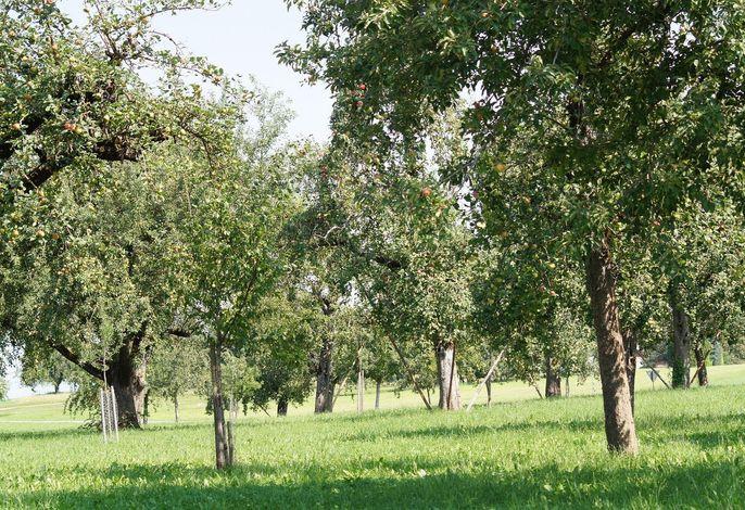Ferienwohnung im Obstgarten