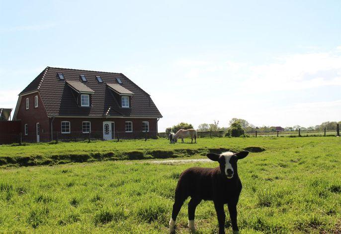 Bauernhof Rickerts