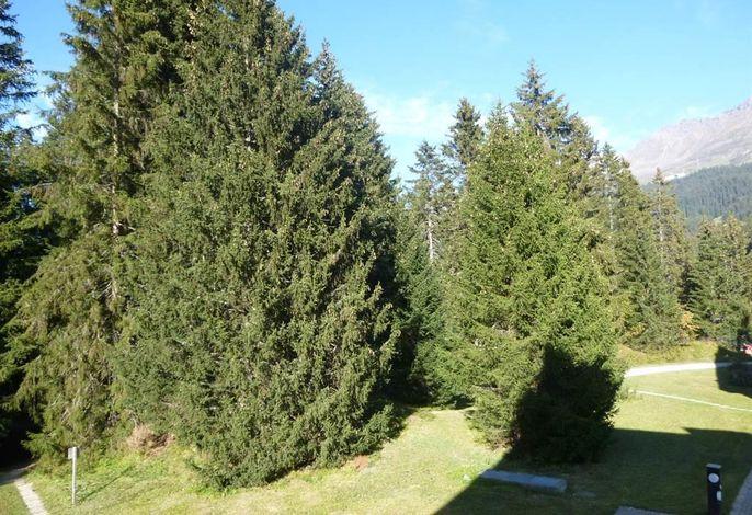 Seegarten B/168Be