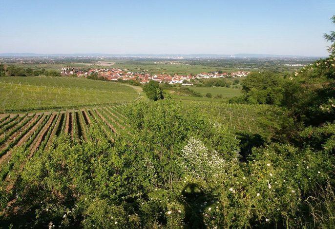 Ferienwohnung Lingenfelder