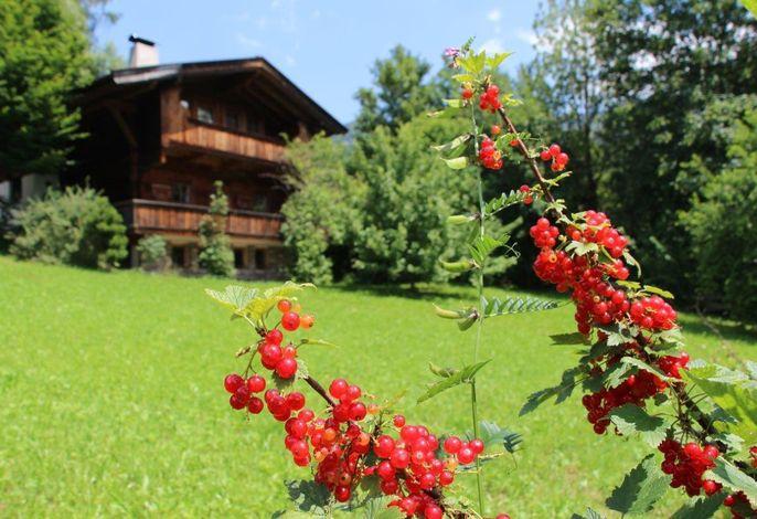 Ferienhaus Schafstall