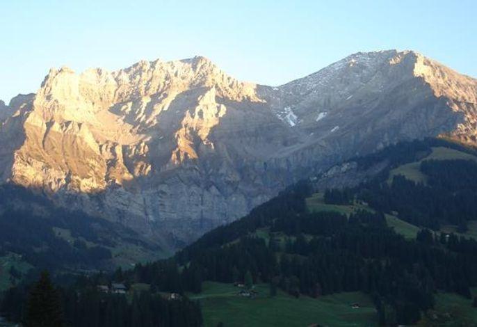 Alpenveilchen 1